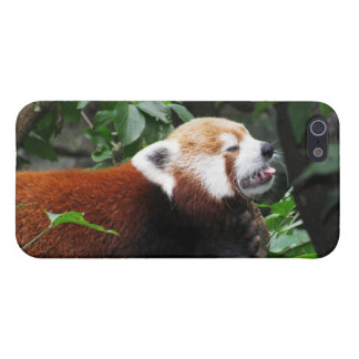 Red Panda stricking its tongue out iPhone 5/5S Covers