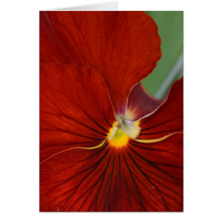Red Pansy Card