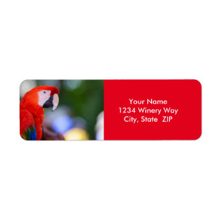 Red Parrot Photograph