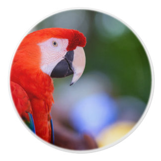 Red Parrot Photograph Ceramic Knob