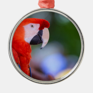 Red Parrot Photograph Metal Ornament