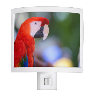 Red Parrot Photograph Nite Lights