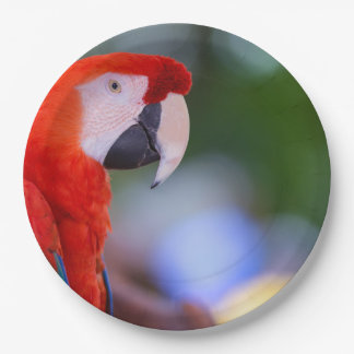 Red Parrot Photograph Paper Plate