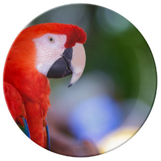 Red Parrot Photograph Plate