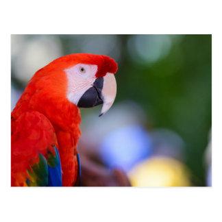 Red Parrot Photograph Postcard