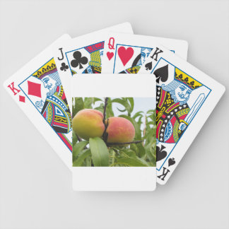 Red peaches hanging on the tree . Tuscany, Italy Bicycle Playing Cards