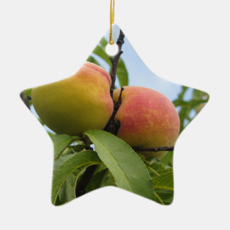 Red peaches hanging on the tree . Tuscany, Italy Ceramic Star Ornament