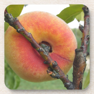Red peaches hanging on the tree . Tuscany, Italy Coaster
