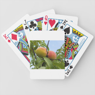 Red peaches hanging on the tree . Tuscany, Italy Poker Deck