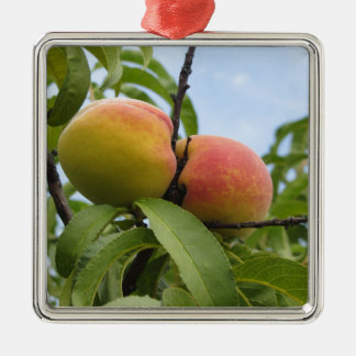 Red peaches hanging on the tree . Tuscany, Italy Silver-Colored Square Ornament