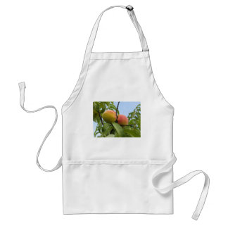 Red peaches hanging on the tree . Tuscany, Italy Standard Apron