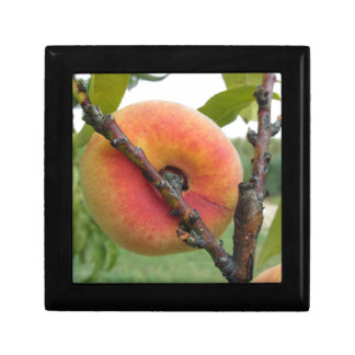 Red peaches hanging on the tree . Tuscany, Italy Trinket Boxes