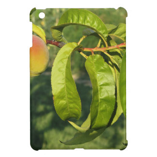 Red peaches on tree branches in a cultivated land case for the iPad mini