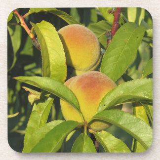 Red peaches on tree branches in a cultivated land coaster