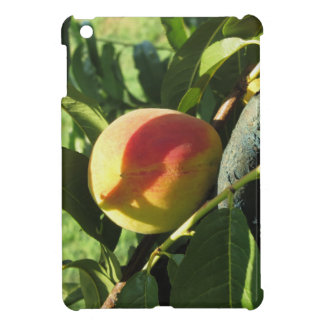 Red peaches on tree branches in a cultivated land cover for the iPad mini