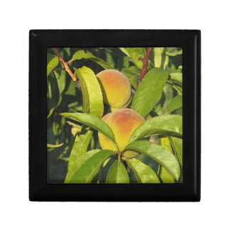 Red peaches on tree branches in a cultivated land gift boxes