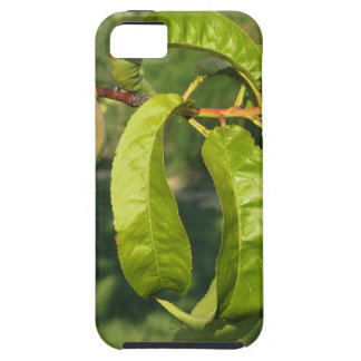Red peaches on tree branches in a cultivated land iPhone 5 cases