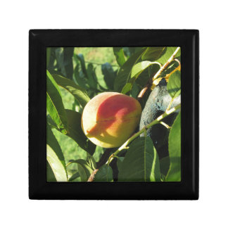 Red peaches on tree branches in a cultivated land jewelry box