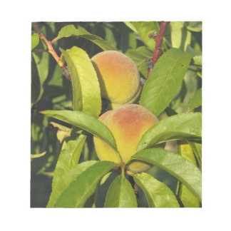 Red peaches on tree branches in a cultivated land notepads