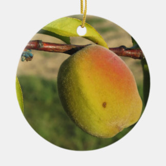 Red peaches on tree branches in a cultivated land round ceramic ornament
