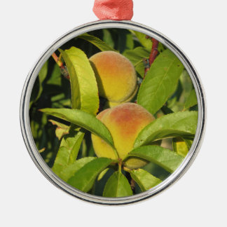 Red peaches on tree branches in a cultivated land Silver-Colored round ornament