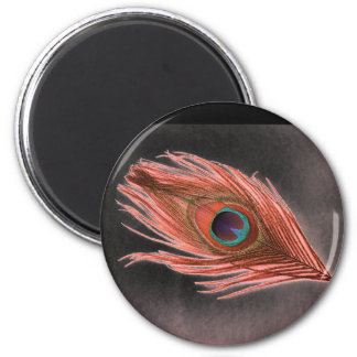 Red Peacock Feather on Black Refrigerator Magnets