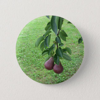 Red pears hanging on a growing pear tree 2 inch round button