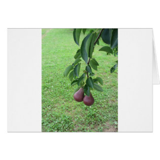 Red pears hanging on a growing pear tree card