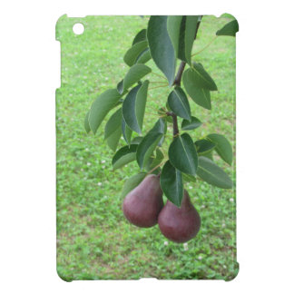 Red pears hanging on a growing pear tree case for the iPad mini
