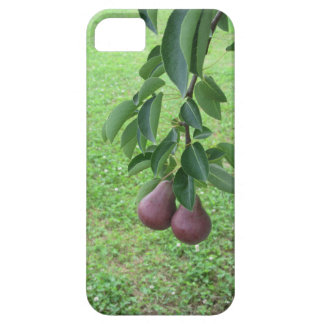 Red pears hanging on a growing pear tree case for the iPhone 5