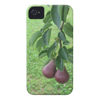 Red pears hanging on a growing pear tree iPhone 4 case