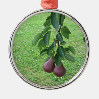Red pears hanging on a growing pear tree metal ornament