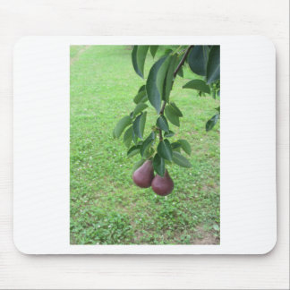 Red pears hanging on a growing pear tree mouse pad