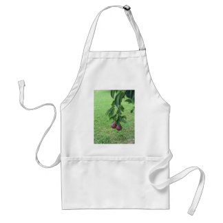 Red pears hanging on a growing pear tree standard apron