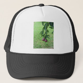 Red pears hanging on a growing pear tree trucker hat