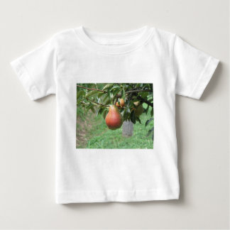 Red pears hanging on the tree . Tuscany, Italy Baby T-Shirt