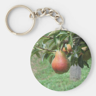 Red pears hanging on the tree . Tuscany, Italy Basic Round Button Keychain