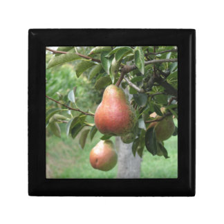 Red pears hanging on the tree . Tuscany, Italy Keepsake Boxes