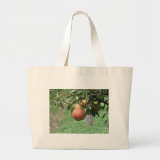 Red pears hanging on the tree . Tuscany, Italy Large Tote Bag