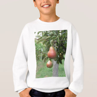 Red pears hanging on the tree . Tuscany, Italy Sweatshirt