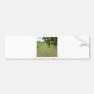 Red pears on tree branches bumper sticker