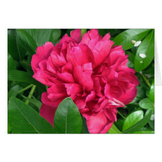 Red Peony Blossom - photograph Card