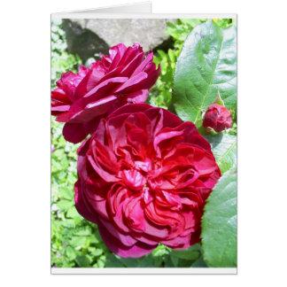 Red Peony Card