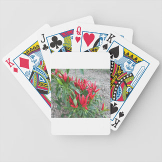 Red peppers hanging on the plant bicycle playing cards