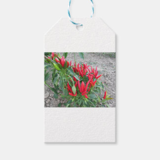 Red peppers hanging on the plant gift tags