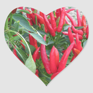 Red peppers hanging on the plant heart sticker
