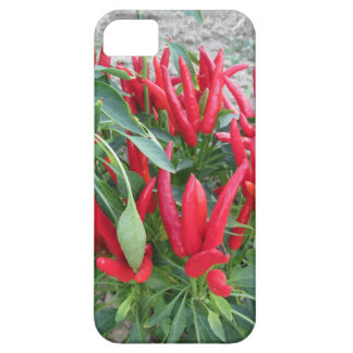 Red peppers hanging on the plant iPhone 5 covers