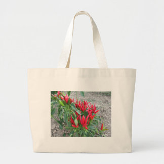 Red peppers hanging on the plant large tote bag