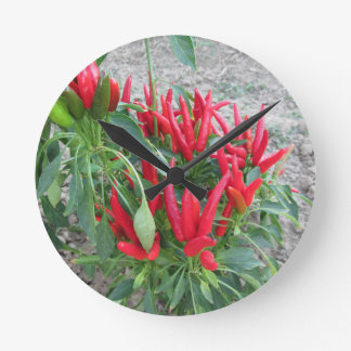 Red peppers hanging on the plant round clock