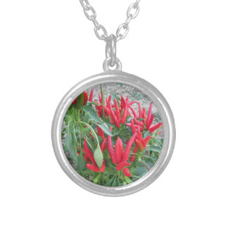 Red peppers hanging on the plant silver plated necklace
